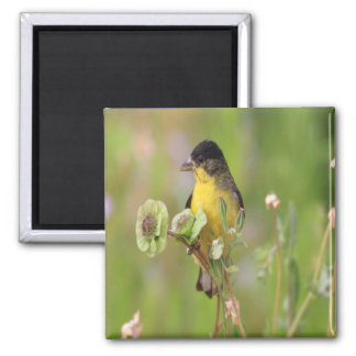 Goldfinch perched on flowers magnet