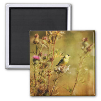 Goldfinch Photo Refrigerator Magnets