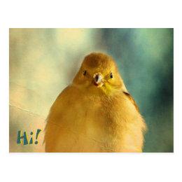 Goldfinch Photo Postcard
