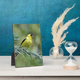 Goldfinch Plaque