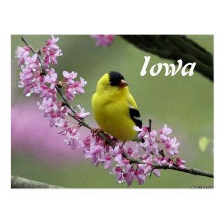 Goldfinch, postal del pájaro del estado de Iowa