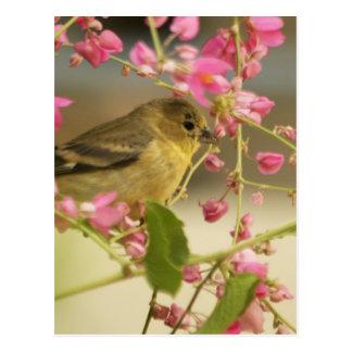 Goldfinch Postales