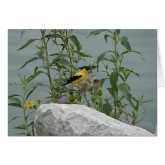 Goldfinch, Thistle & Rock At Lakeshore Card