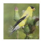 Goldfinch Tiles