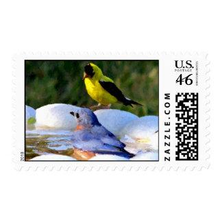 Goldfinch y Bluebird