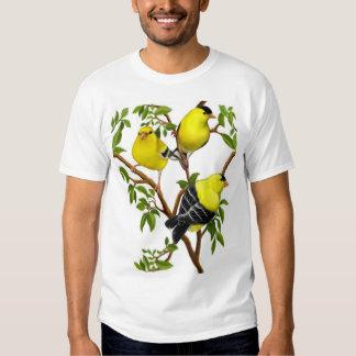 Goldfinches americanos en camisa de las vides