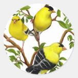 Goldfinches americanos en pegatina de las vides