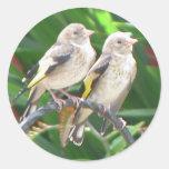 goldfinchs del bebé etiqueta redonda