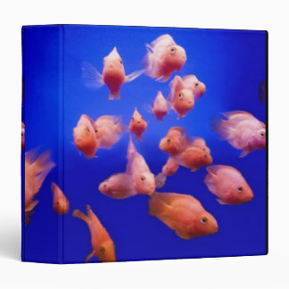Goldfish 2 3 ring binder
