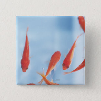 Goldfish 2 button
