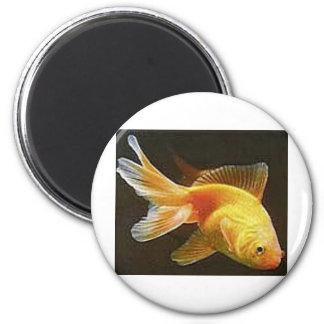 Goldfish 2 Inch Round Magnet