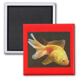 Goldfish 2 Inch Square Magnet
