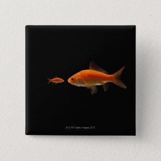Goldfish 3 button
