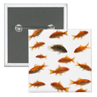 Goldfish 3 pinback button