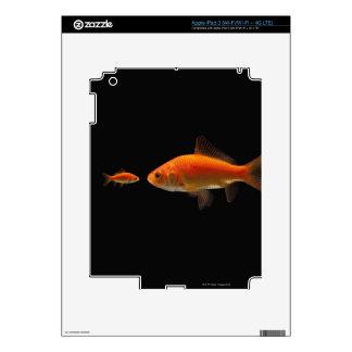 Goldfish 3 iPad 3 skins