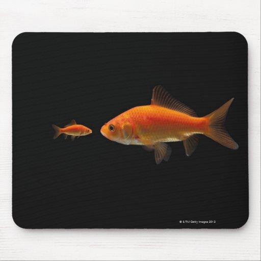 Goldfish 3 tapetes de raton