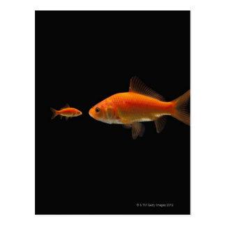 Goldfish 3 tarjetas postales
