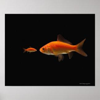 Goldfish 4 póster