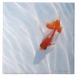 Goldfish 5 azulejos