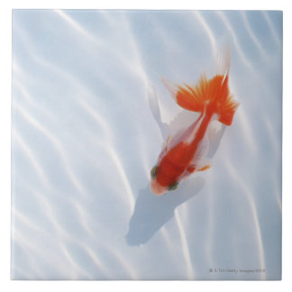 Goldfish 5 ceramic tiles