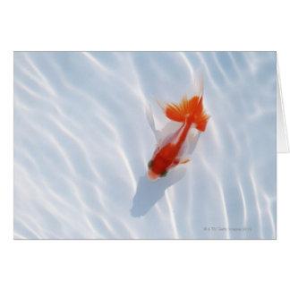 Goldfish 5 greeting cards