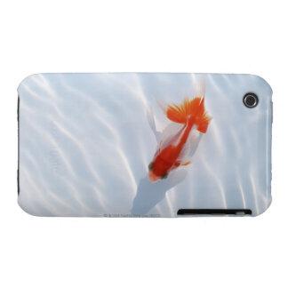 Goldfish 5 iPhone 3 cases