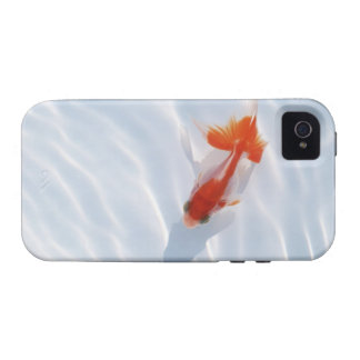 Goldfish 5 iPhone 4/4S cover