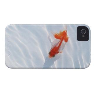 Goldfish 5 iPhone 4 cover