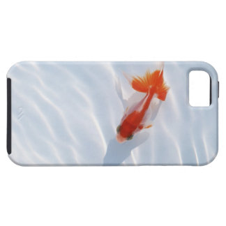Goldfish 5 iPhone 5 cover