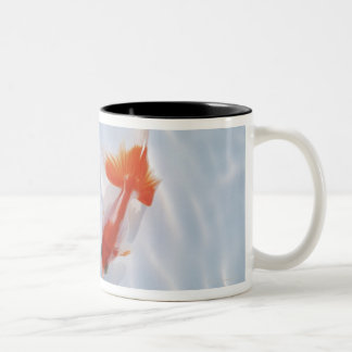 Goldfish 5 mug