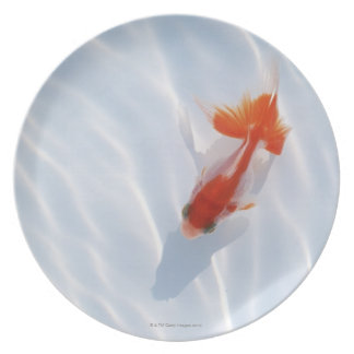 Goldfish 5 plates
