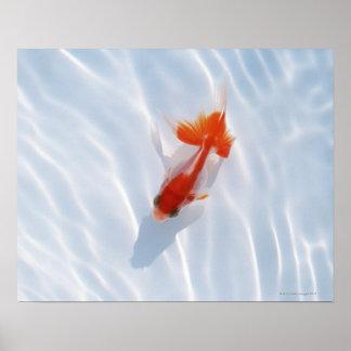 Goldfish 5 print