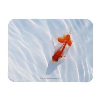 Goldfish 5 rectangle magnets