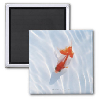 Goldfish 5 refrigerator magnets