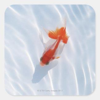 Goldfish 5 square stickers