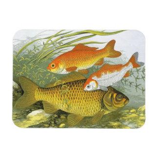 Goldfish acuático Koi, pescado marino del vintage Iman De Vinilo