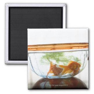 Goldfish bowl 2 inch square magnet