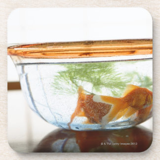 Goldfish bowl drink coaster