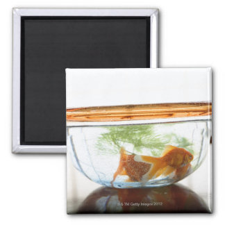 Goldfish bowl fridge magnet