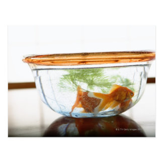 Goldfish bowl postcards