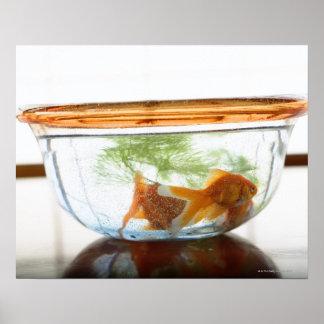 Goldfish bowl print