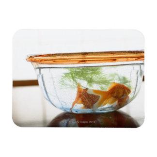 Goldfish bowl rectangular photo magnet