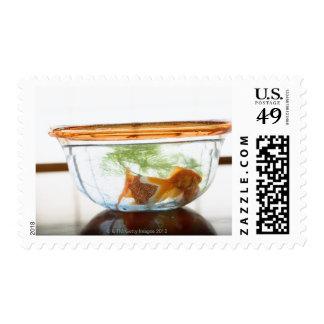 Goldfish bowl stamp