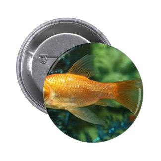 Goldfish Button