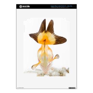 Goldfish Carassius auratus 2 iPad 3 Skin