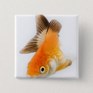 Goldfish (Carassius auratus) Button