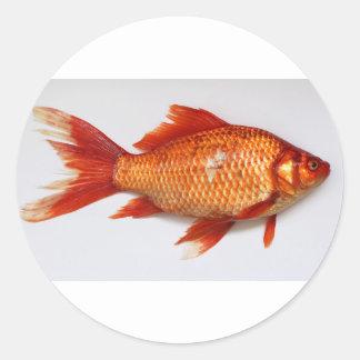 Goldfish Classic Round Sticker