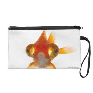 Goldfish con los ojos grandes 2