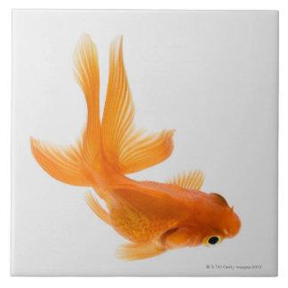 Goldfish de la cola de milano (auratus del Carassi Teja Cerámica