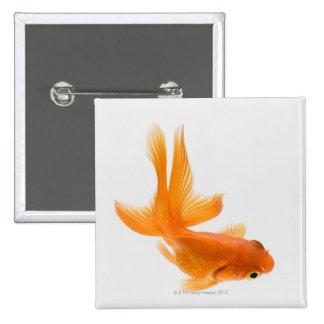 Goldfish de la cola de milano (auratus del Carassi Pin Cuadrado